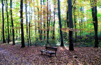 Bild mit Natur, Landschaften, Bäume, Wälder, Sonne, Wald, Baum, Landschaft, Entspannung, Landschaft und Natur