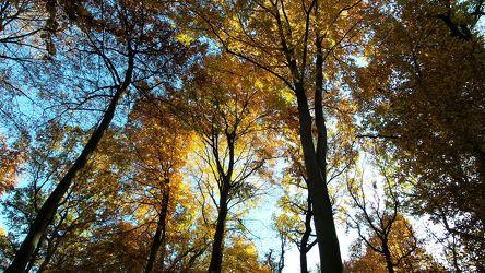 Bild mit Bäume, Jahreszeiten, Herbst, Wald, Entspannung, Landschaft und Natur, Herbstsonne, Herbstlicht, Goldener Herbst, Oktober, November, Herbststimmung, Baumwipfel