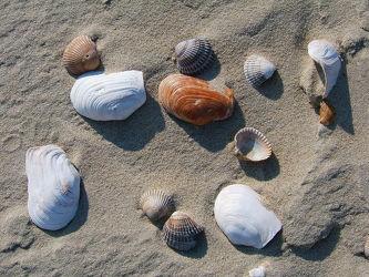 Bild mit Strände, Strand, Meer, Düne, Dünen, Muschel, Muscheln