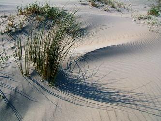 Bild mit Sand, Strand, Meer, Dünen, Dünengras, Nordsee, Borkum, Hochseeinsel, Heilklima, Dünenbefestigung, Naturschutzgebiete, Salzluft