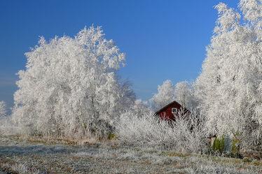 Bild mit Pflanzen,Himmel,Bäume,Winter,Weiß,Sträucher,Blau,Winterzeit,Idylle,Rauhreif,Raureif,Waldhaus