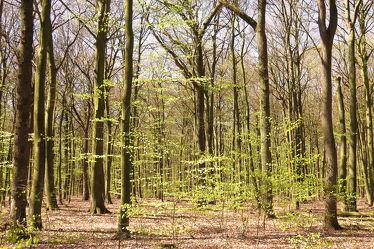Bild mit Grün, Landschaften, Frühling, Laubbäume, Wald, Blätter, Licht