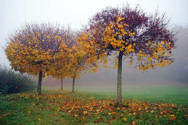 Bild mit Bäume, Herbst, Nebel, Blätter, November, Herbststimmung, Dunst, Kugelbäume