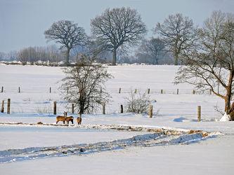 Winterlandschaftsidylle