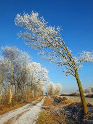 Bild mit Himmel,Bäume,Bäume,Winter,Blau,Winterzeit,Wanderwege,Schleswig_Holstein,Azur,Raureif,Büsche,Naturpark_Westensee,Westensee,Nortorfer_Land,Nortorf