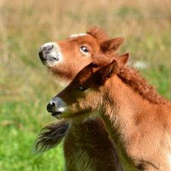 Bild mit Säugetiere, Pferde, Kinderbild, Kinderbilder, Kinderzimmer, Pferd, Weide, reiten, Porträt, Fohlen, Spielen, Pferdeliebe, pferdebilder, pferdebild