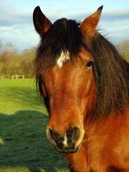 Mein Freund das Pferd