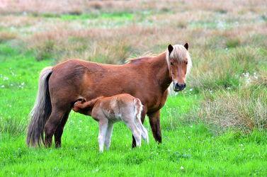 Bild mit Säugetiere, Sport, Trinken, Pferde, Kinderzimmer, Pferd, Kind, Freundschaft, Weide, reiten, landwirtschaft, Fohlen, Mutter, Tierliebe, Haustier