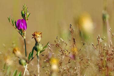 Bild mit Gräser, Blumen, Herbst, Wiese, Felder, Abendsonne