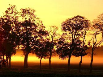 Bild mit Himmel,Frühling,Nebel,Baum,Landschaft,Sonnenschein,Usedom,Tapete,rote,Deko,Morgenstimmung,Dunst