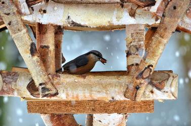 Bild mit Tiere, Winter, Schnee, Wälder, Vögel, Wald, Tier, Tierwelt, Kleiber