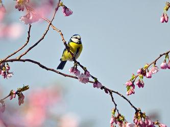 Ein schöner Frühlingstag wahrs