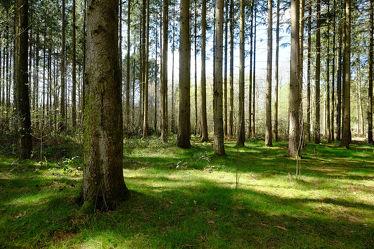 Bild mit Gräser, Landschaften, Frühling, Sonne, Nadelwald, Licht, Fichtenwald, Wachstum
