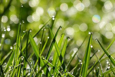 Bild mit Grün,Gräser,Gras,Gegenlicht,Licht,Regentropfen,Makros,Ausspannen,Geniessen,Idylle,Faszination,Tautropfen,Wellnes,Hoffnung