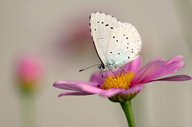Bild mit Blumen, Herbst, Insekten, Schmetterlinge, garten, Falter