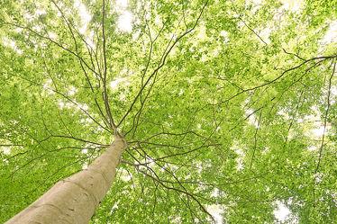 Das Blätterdach