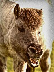 Bild mit Tiere, Säugetiere, Pferde, Pferde, Tier, Kinderbild, Kinderbilder, Pferd, Pferd, reiten, Traum, Atem, Freund, Traumbild, Küsse, Begrüßung, Liebling, Atemluft, Freundin, Pferdeliebe, pferdebilder, pferdebild