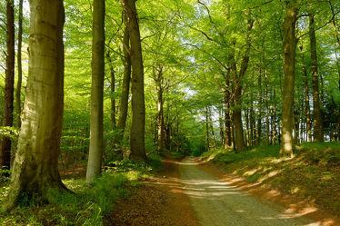 Bild mit Natur, Bäume, Wälder, Frühling, Wege, Wald, Baum, Weg, Blätter, Laubwald, Laubwälder, Erholung, Sonnenlicht