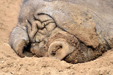Sonnenbad am Sandstrand
