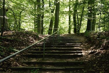 Bild mit Natur, Bäume, Wälder, Treppen, Wald, Baum, Spaziergang, Sonnenlicht, treppe