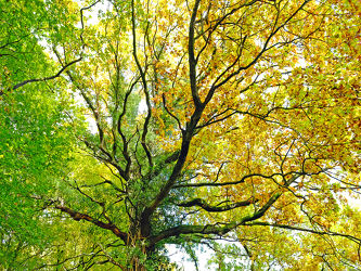 Bild mit Natur, Bäume, Wälder, Wald, Blätter, Blatt, Spaziergang, Ast, Äste
