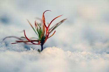 Bild mit Gelb, Schnee, Eis, Weiß, Rot, Blau, Sonne, Gras, Licht, Felder, Acryl, Tapete, Winterzeit, Frost, Wiesen, Ausspannen, Idylle, Moos, Wandbehang