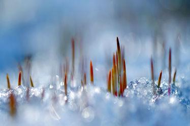 Bild mit Gelb,Schnee,Eis,Weiß,Rot,Blau,Sonne,Gras,Licht,Felder,Winterzeit,Frost,Wiesen,Idylle,Moos