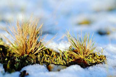 Bild mit Gelb, Grün, Gräser, Schnee, Eis, Weiß, Blau, Sonne, Gras, Licht, Felder, Winterzeit, Frost, Wiesen, Idylle