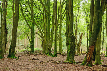 Bild mit Bäume, Wälder, Wald, Blätter, Laubblätter, Sonnenlicht, Laub