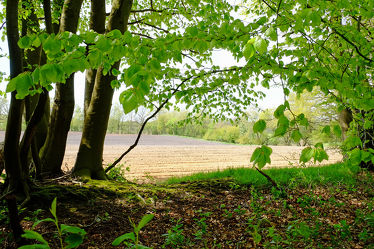 Bild mit Grün, Landschaften, Bäume, Frühling, Sträucher, Sonne, Wald, Blätter, Waldrand, Licht, Felder, Felder, farbig, Ackerland, Bunter_ Frühjahr
