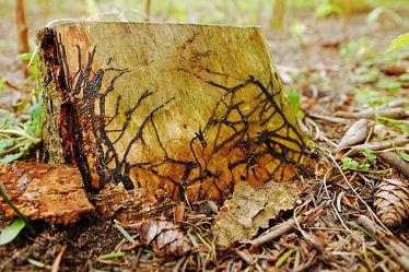 Bild mit Tiere, Bäume, Wälder, Insekten, Wald, Baumstamm, Makro, Extras, nahaufnahme, Leben, Fressen, Spuren, ökologie, sterben