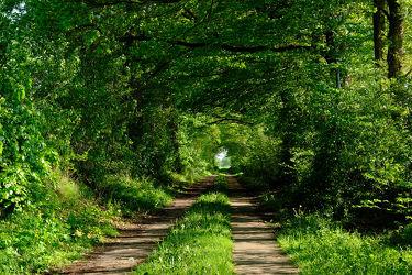 Bild mit Bäume,Frühling,Sonne,Wald,Wanderweg,Alleen,Wandern,Abendsonne