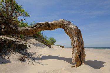 Ostseesteilküste