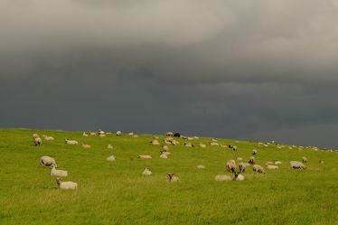 Bild mit Säugetiere, Wolken, Sonne, Nordsee, Küste, Schafe, Nordseeküste, Sonnenlicht, Sturmschutz, Unwetter, Deiche, Schutz, Nutztiere, Seedeiche, Deichschutz