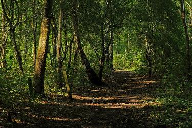 Bild mit Bäume, Wälder, Wald, Wald, Baum, Waldweg, Blätter, Laubwald, Dickicht, Wandern