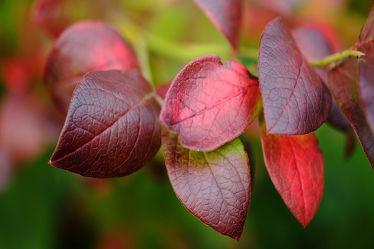 Bild mit Herbst, Herbst, Makro, Bunt, Herbstblätter, Rotbunt