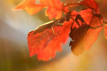 Bild mit Herbst, Herbst, Sonne, Blätter, Makro, Gegenlicht, nahaufnahme, Sonnenstrahlen, Abendsonne, Boten