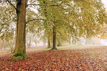 Bild mit Bäume,Herbst,Herbst,Wege,Nebel,Textur,Wandern,Dunst