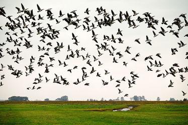 Bild mit Himmel,Dämmerung,Vögel,Gänse,Felder,Wiesen,Naturschauspiel,Blaue_Stunde,Erde,Deiche,Nachtlager
