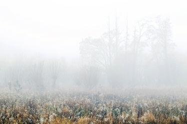 Bild mit Bäume,Herbst,Herbst,Wege,Nebel,Felder,Moor,Dunst,Kopfweiden