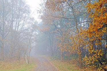 Bild mit Bäume,Herbst,Herbst,Wege,Nebel,Wald,Wanderweg,Wandern,Ausspannen,Dunst