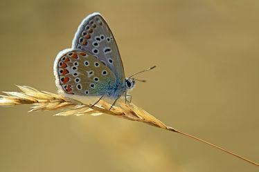 Bild mit Tiere, Natur, Insekten, Schmetterlinge, Tier, Schmetterling, Tagfalter, Insekt