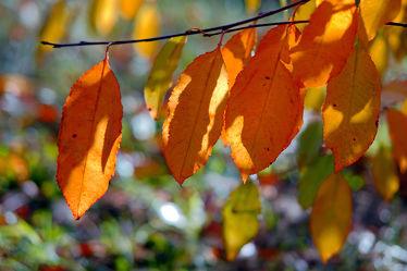 Bild mit Bäume, Parks, Herbst, Blätter, Bunt, garten, FARBE, farbig