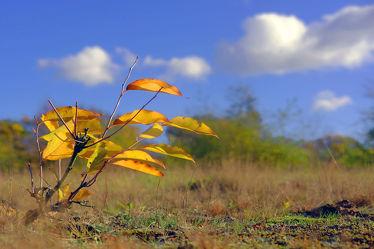 Bunte Blätter wehen