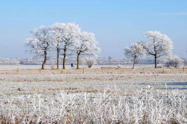 Bild mit Gräser, Himmel, Bäume, Winter, Weiß, Blau, Sonne, Felder, Winterzeit, Erholung, Wiesen, Sonnenlicht, Wandern, Ausspannen, Land, Raureif, Weit