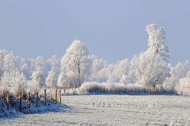 Bild mit Himmel,Bäume,Schnee,Felder,Winterzeit,Wiesen,Raureif,Dunst,Wolkenlos