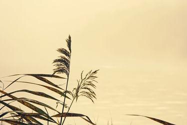 Bild mit Pflanzen,Gewässer,Herbst,Gegenlicht,See,Winterzeit,nahaufnahme,Sonnenlicht,Ausspannen,Geniessen,reet,Ufer