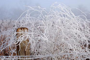 Bild mit Pflanzen, Winter, Weiß, Nebel, Felder, Winterzeit, Wiesen, Raureif, Dunst, Pfähle, Pfahl, Sonnenblumenfeld