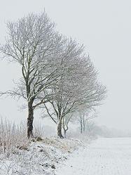 Schnee erfreut die Kinder