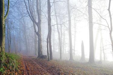 Bild mit Bäume, Winter, Winter, Herbst, Nebel, Wald, Blätter, Wanderweg, Herbstblätter, Winterzeit, Sonnenlicht, Moos, Spätherbst, Nebelschwaden, Schneelos